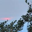 今朝はどんよりとした曇り空の中 ・・・