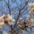 春休み、京都家族旅行