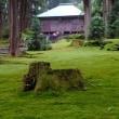 今年は白山開山1300年で福井県側のゆかり平泉寺は苔の神社