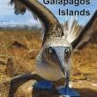 近着QSL(紙)HD8M 30m/CW