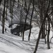 【ロング】早春スノーシュー「ヒミツの巨木と沼めぐり」下見に行ってきました。