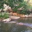 王子動物園などを散策