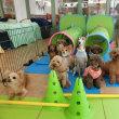 幼稚園体験にきてくれた【こうたくん】(*^-^*)  犬のしつけ教室@アロハドギー