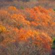 11月21日 晩秋の紅葉