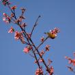 蜂須賀桜の季節に