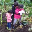 21日秋の収穫体験+ラッカセイ堀りの援農体験