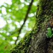 樹を登るカエル