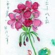Masakoさん 7月絵手紙