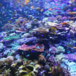 名古屋港水族館🐟