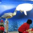 超絶!音速観光!!伊勢と鳥羽を全力で遊べ!!(その26)鳥羽水族館 -大型熱帯魚とラッコさん-