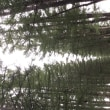 帯広農業高校カラマツ防風林並木