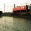 鹿児島本線ED76 水城ー都府楼南 2005-06-25