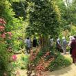 今日の庭へ