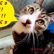 リーちゃんの愉しい思い出&風太と猫小屋~♪