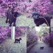 桜とよもぎ^_^