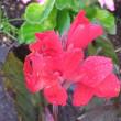 カンナが綺麗!、 県立三木山森林公園
