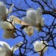 大石邦子「春を告げて」