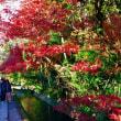 京都の秋 ~ 哲学の道の紅葉