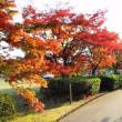曽木の滝の紅葉・・・鹿児島の風景