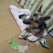 破壊犬レオナ 本日の 活躍?!