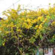 我が家の庭.春の草木花を撮る