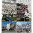 埼玉-742 駅前ハイツ 東鷲宮ニュータウン③