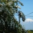 山の家のコデマリと富士山