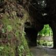 鎌倉 海蔵寺の萩