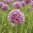 この花何でしょう?