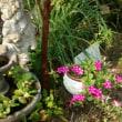 「ホテイアオイ」の花も綺麗ですね。そして、今年は「ちいちいゼミ」が多いんだなー。