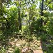 山野草の庭のリフォーム