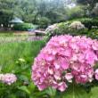 〈0614〉Rebonさんに納品 & 出雲大社の紫陽花