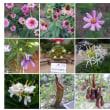 20120818花の美術館02