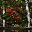 秋探しの旅(親友とともに)
