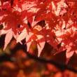 恒例の紅葉狩り