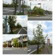 花巡り 「花水木-235」 桜田運動公園
