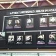 南紀白浜アドベンチャーワールド Pandas in Shirahama