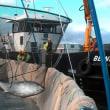 サケ養殖業者がクロマグロをリリース   スコットランド
