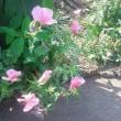 サボテンの花が咲いたよ~~~