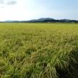 穀倉地帯を散歩。