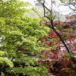 新緑の日吉八幡神社境内