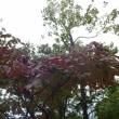 福岡市植物園・・・・・名も無き花々