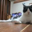 猫と貯蓄の日