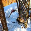 雪解けとドカ雪による雪害。。