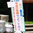イワタバコが満開の高尾山蛇滝口から霞台へ 2018.7.15