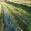 久しぶりの農作業