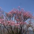 篠山(4月21日)