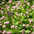 お花畑は蝶の楽園