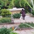 公園の朝「犬とハイヒールとコート!」