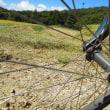 稲刈りと自転車